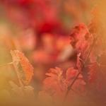 ..as tonalidades do Douro no Outono ..