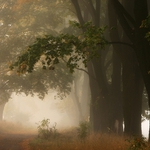 Autumn in Poland IV