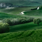 Green Orcia