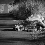 Morte na rodovia_