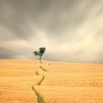 Last tree of life