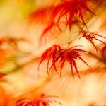 Autumn fusion