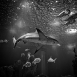 Aquarium (Oceanario de Lisboa)