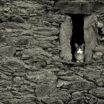 Felino á janela...