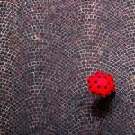 urban ladybug