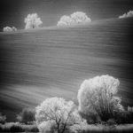 Moravian trees