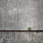 persistence (6)
