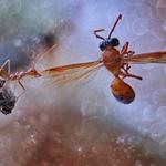 Ant versus Bee