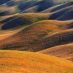 Tuscan hills ..