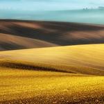 misting fields