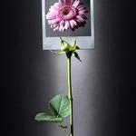A rose is still a rose, isn't it?