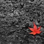 Pedaços de Outono