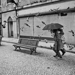 between rain and pigeons