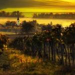 Moravian vineyard
