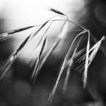 Black & White Poetry