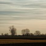 Trees Land