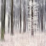 Frosted fir