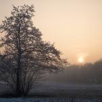 Winter Decline