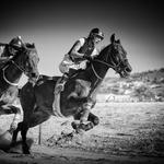 ...Corridas Cavalos...
