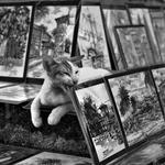 CAT & PAINTING