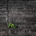 persistence (7)