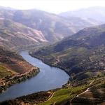 O Douro e as vinhas