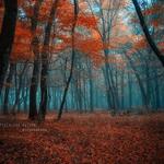 speechless autumn