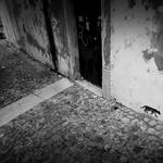 Rua dos gatos