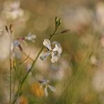 A suavidade da primavera_