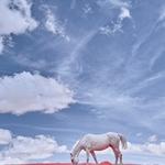 White horse (infrared)
