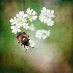 >Bug !