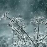 chuva de luz____
