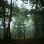 strange forest