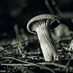 Um prego na floresta_