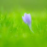 Spring wild flower 4