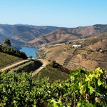 As Vinhas e o Douro