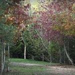 Paz de outono