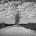 A estrada dos campos