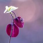 como se fosse uma flor___