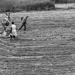 Gradando a terra