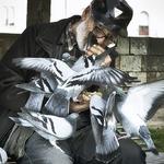 beloved Pigeons