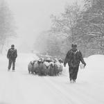 winter business