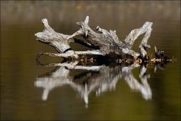 Reflexos no Lago