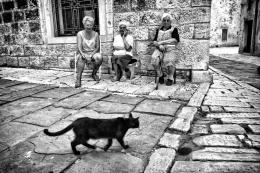 nero gatto (the black cat)