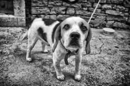 beagle's View