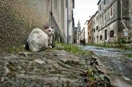 Cat's life ( vita da gatti )