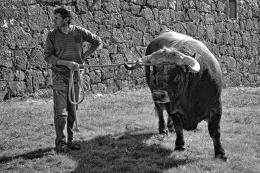 O homem e o boi
