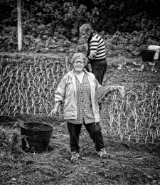 Plantando o cebolo (intervalo)