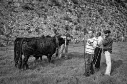 Na feira com o gado