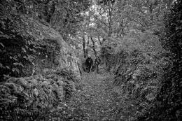 Na floresta galega